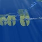 Bølgeenergianlæg klar til markedet